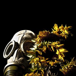 Gas Mask And Flowers Photograph